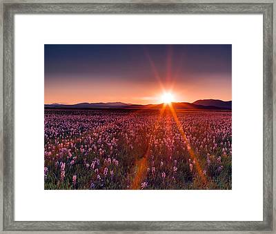 Sun Rays And Wildflowers Framed Print by Leland D Howard