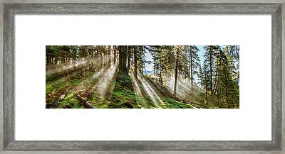 Sun Rays Passing Through Trees Framed Print by Panoramic Images
