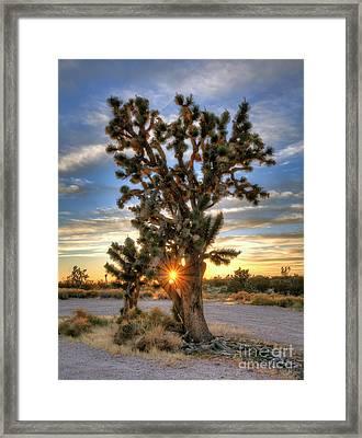 Sun Rays Through A Joshua Tree Framed Print by Eddie Yerkish
