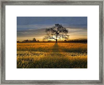 Sun Rise Oak In Yellow Mustard Framed Print by Stan Angel