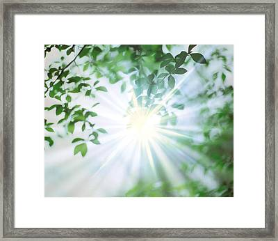 Sun Shining Through Leaves, Lens Flare Framed Print by Panoramic Images