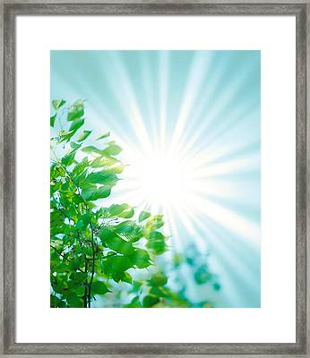 Sun Shining Through Leaves Framed Print by Panoramic Images