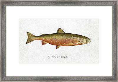 Sunapee Trout Framed Print by Aged Pixel