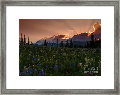 Sunbeam Garden Framed Print by Mike  Dawson
