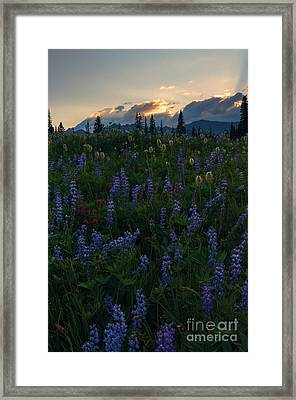 Sunbeams Over Rainier Framed Print by Mike  Dawson