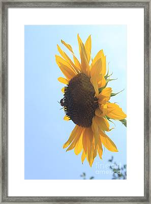 Sunbee Framed Print by Lotus