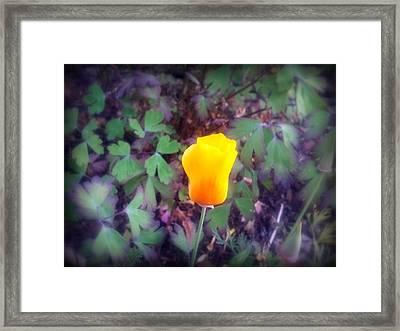 Sunburst Framed Print by Heather L Wright