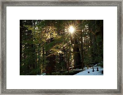 Sunburst In The Rainforest, Olympic Framed Print by Art Wolfe