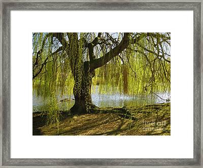 Sunday In The Park Framed Print by Madeline Ellis
