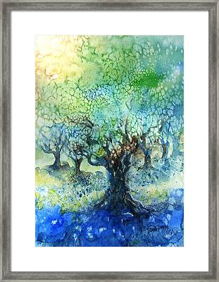 Sundrenched Olive Grove   Framed Print by Trudi Doyle