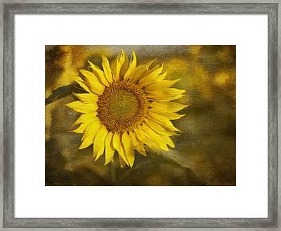 Sunflower And Sunshine  Framed Print by Ivelina G
