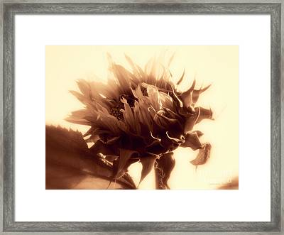 Sunflower - Au Revoir Framed Print by Janine Riley