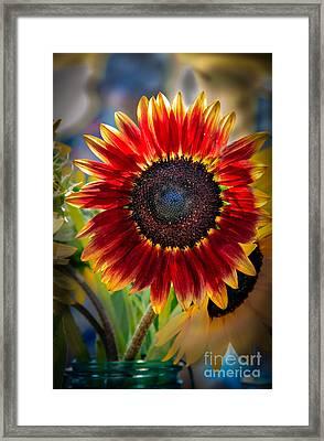 Sunflower Beauty Framed Print by Robert Bales
