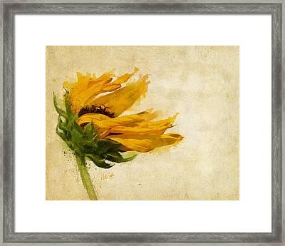 Sunflower Breezes Framed Print by Nikki Marie Smith
