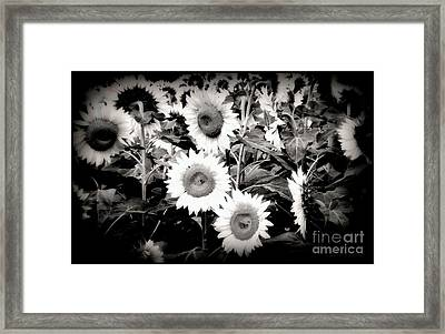 Sunflower Cinema In Black And White Framed Print by Janine Riley