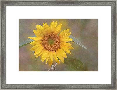 Sunflower Dream Framed Print by Angie Vogel