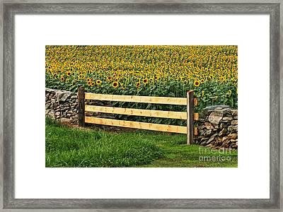 Sunflower Fence Framed Print by Marcel  J Goetz  Sr