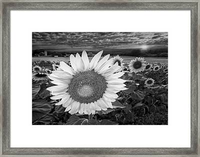 Sunflower Field Forever Bw Framed Print by Susan Candelario