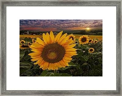Sunflower Field Forever Framed Print by Susan Candelario