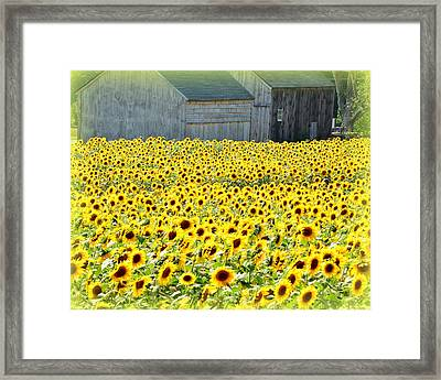 Sunflower Field Of Dreams Framed Print by Kathy Kenney