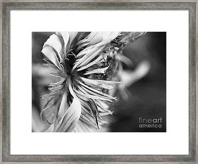 Sunflower Focus Framed Print by Terry Rowe
