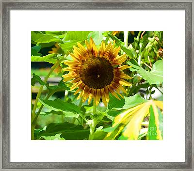 Sunflower From Mark Twain Framed Print by Luther   Fine Art