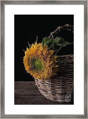 Sunflower In A Basket Framed Print by Edward Fielding