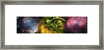 Sunflower In The Hubble Cosmos Framed Print by Panoramic Images