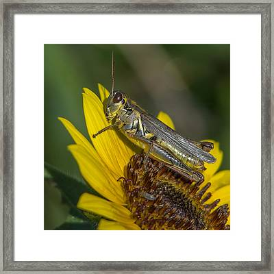 Sunflower Love Framed Print by Ernie Echols