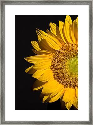 Sunflower Framed Print by Mark Ashkenazi