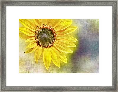 Sunflower Framed Print by Penny Pesaturo