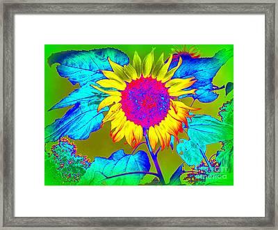 Sunflower Pop Framed Print by Ed Weidman