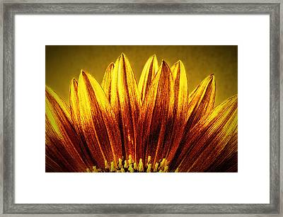 Sunflower Framed Print by Richard Allen