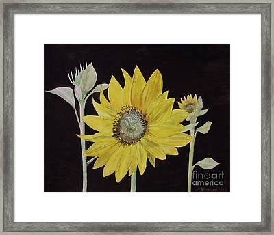 Sunflower Study Framed Print by Martin Howard