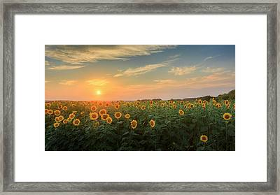 Sunflower Sundown Framed Print by Bill Wakeley