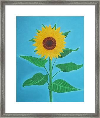 Sunflower Framed Print by Sven Fischer