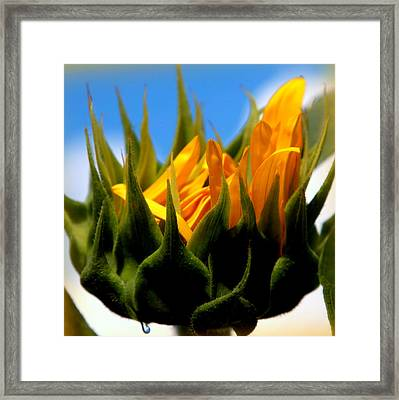 Sunflower Teardrop Framed Print by Karen Wiles