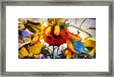 Sunflower Tender Framed Print by Janine Riley