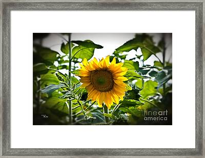 Sunflower Vignette Edges Framed Print by Ms Judi