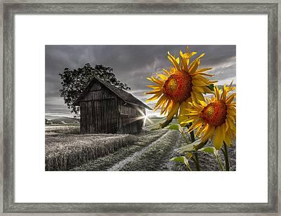 Sunflower Watch Framed Print by Debra and Dave Vanderlaan