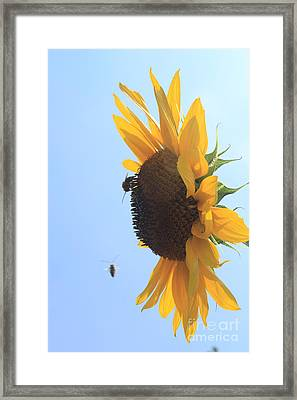 Sunflower With Visitors Framed Print by Lotus