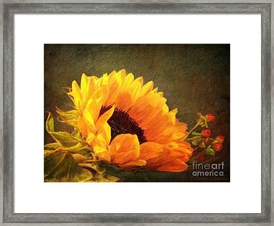 Sunflower - You Are My Sunshine Framed Print by Lianne Schneider
