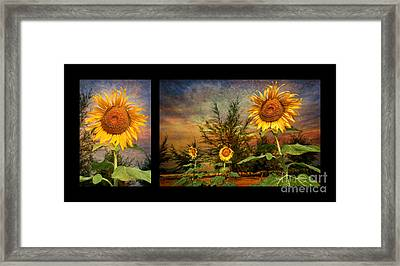 Sunflowers Framed Print by Adrian Evans