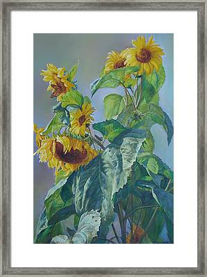 Sunflowers After The Rain Framed Print by Svitozar Nenyuk