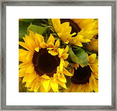Sunflowers Framed Print by Amy Vangsgard