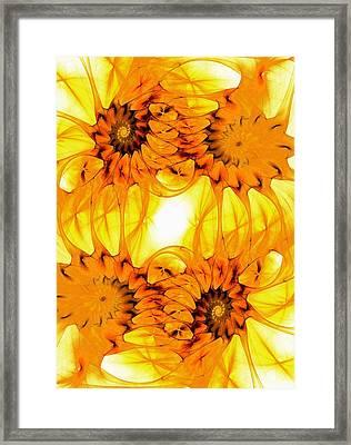 Sunflowers Framed Print by Anastasiya Malakhova