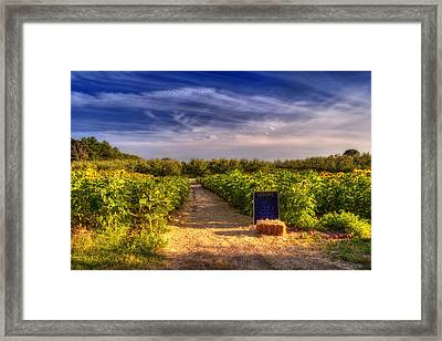 Sunflowers And Orchards  Framed Print by Joann Vitali