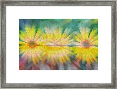 Sunflowers Framed Print by Dan Sproul
