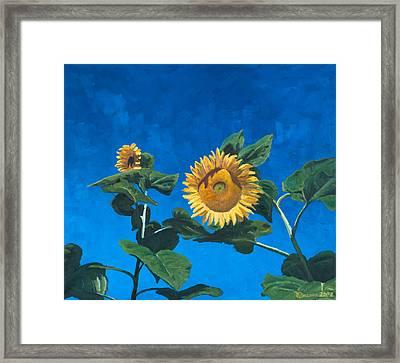 Sunflowers Framed Print by Marco Busoni