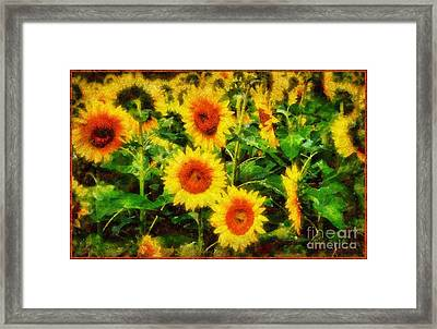 Sunflowers Parade In A Field Framed Print by Janine Riley